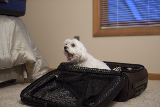 IMG_2648-Doppler Wants To Travel