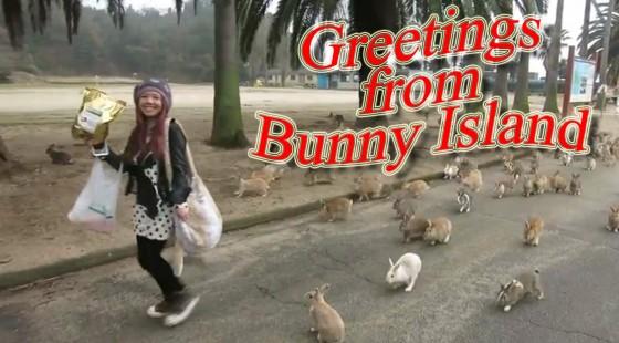 bunny-island