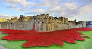 poppies at Tower2
