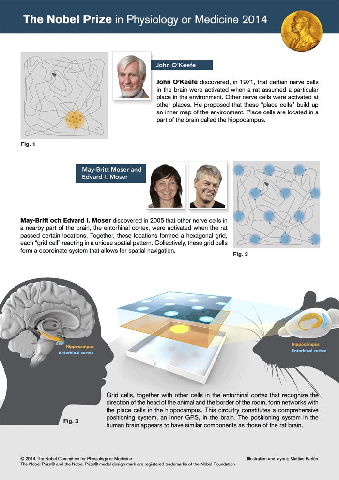 nobel-prize-gps-brain