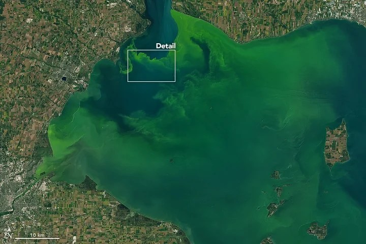 Zoomed out view of bloom in Lake Erie. Source: Landsat 8, NASA.