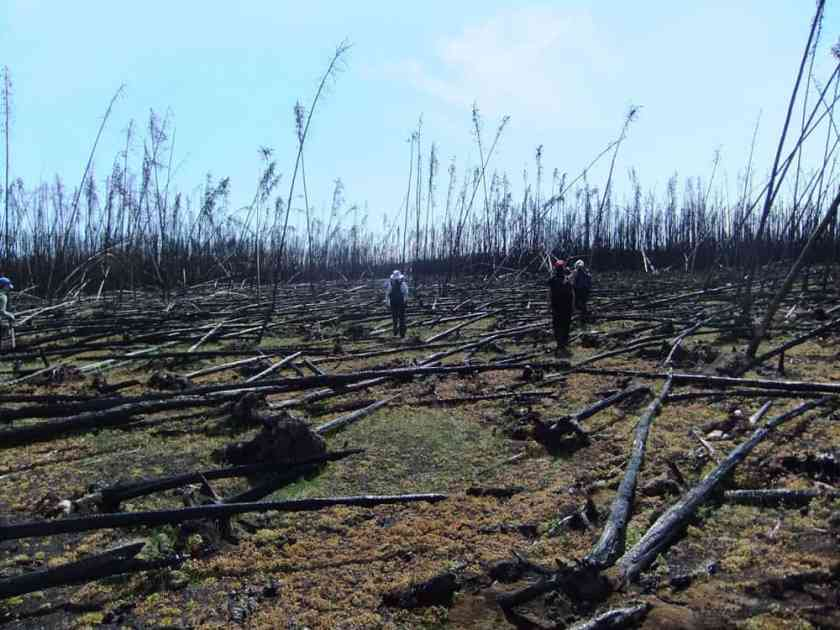 """The research team sampled more than 200 plots in the forests of Canada's Northwest Territories to see whether """"legacy"""" carbon left over from previous fire cycles was threatened by the intense 2014 fires. They found that forests less than 60 years old and located in drier climates had a higher risk of losing legacy carbon in the fires than older, wetter forests. Credit: NASA / Xanthe Walker, Center for Ecosystem Science and Society at Northern Arizona University"""