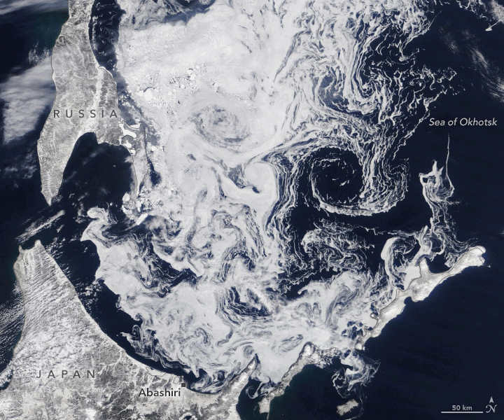 Drift ice in the Sea of Okhotsk. Image: Landsat 8, NASA.