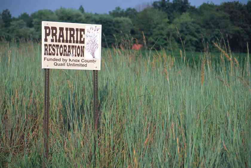 Restoring land from intense agricultural use to grasslands and forests can boost carbon storage and create more diverse habitat for wildlife.  Native prairie restoration on former cropland near Vincennes, Indiana.  Photo: Tom Loveland, USGS. Public domain