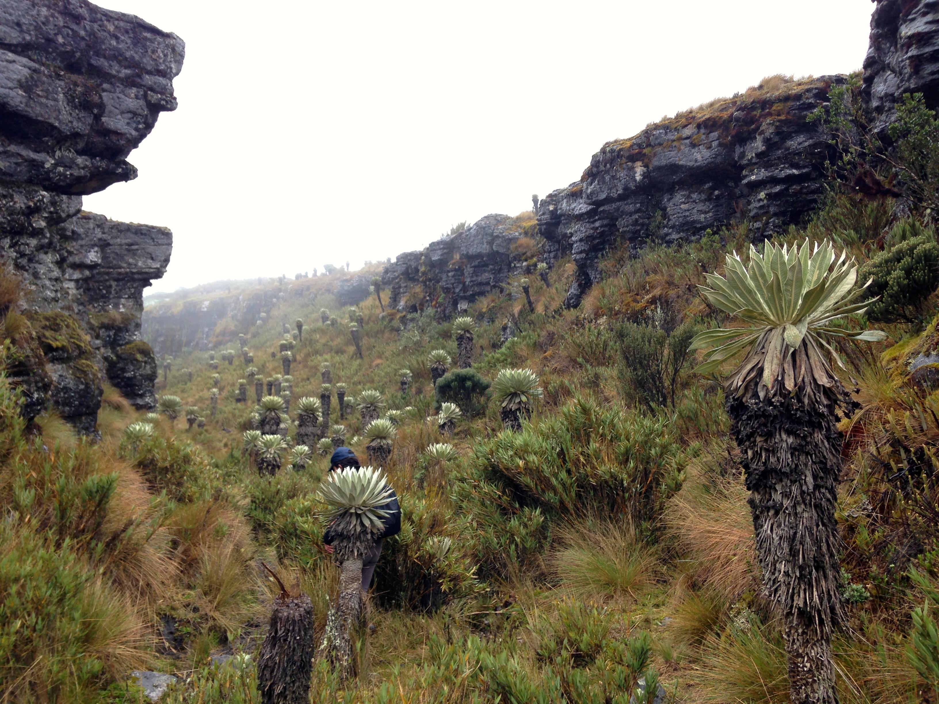 Canyons and ravines defined Páramo Oceta