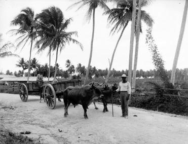 Carretera Central - tramo San Juan (c. 1901)