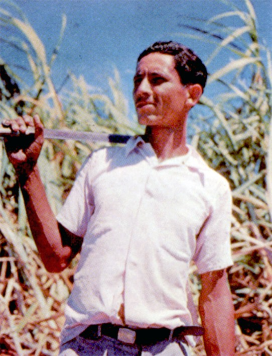 Thousands of Puerto Rican workers cut sugar cane during the island's harvest season, and they fly to the mainland United States to harvest the crops there, returning to Puerto Rico for the next cane crop.