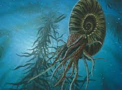 Rekonstruerad ammonit