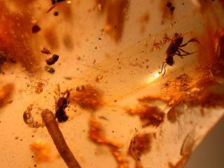 Insekter i bärnsten