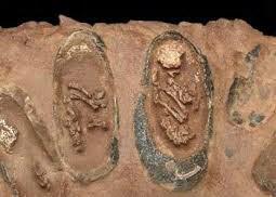 Dinosaurie embryon i äggen