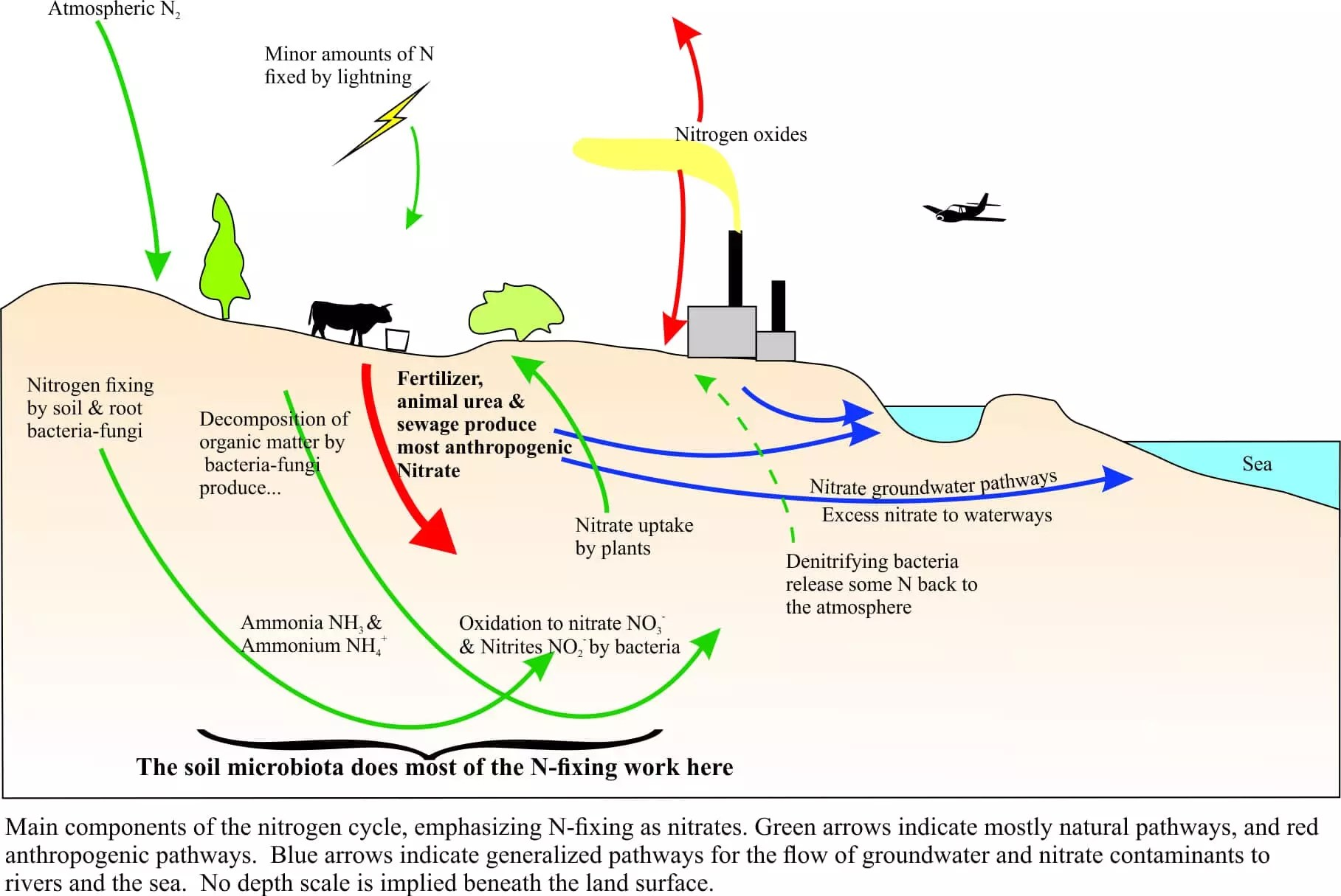 Nitrate in excess a burgeoning global contamination problem like soils vegetation animals water and so on that account annually for the addition of about 210 million tonnes of reactive nitrogen pooptronica Images