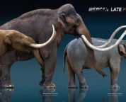 the loss of large land mammals could change geology forever