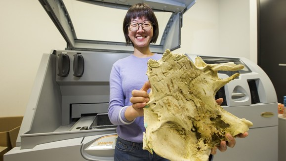 ANU PhD student Yuzhi Hu with a 3D print of the 400 million year old fish fossil that is six times the size of the specimen. Credit: Australian National University