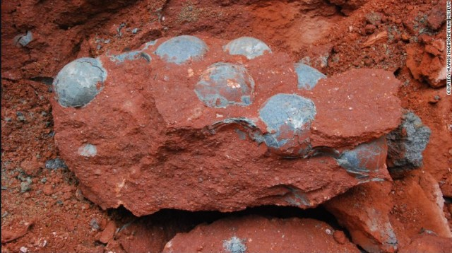 Fossilized dinosaur eggs found in China