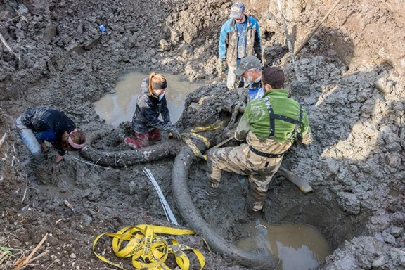Securing the mammoth skull and tusks with straps before hoisting it out of the pit. Pictured from left to right (all from U-M): former archaeology graduate student Ashley Lemke, Earth and Environmental Sciences undergraduate Jessica Hicks, former paleontology graduate student John Fronimos (Ph.D. 2016), paleontologist Daniel Fisher, and paleontology graduate student Joe El-Adli. Image credit: Daryl Marshke, Michigan Photography