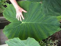 Scegliere le piante in base alle loro esigenze: 3 – l'acqua e la dimensione