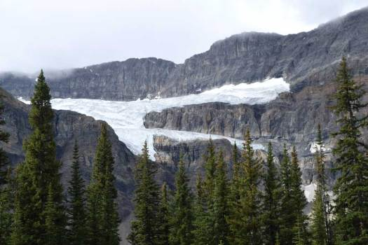 Crowfoot Glacier.