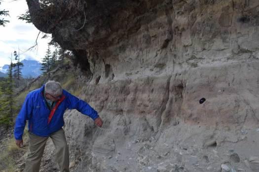 Mazama and Bridge River volcanic ashes exposed in bank cut near Saskatchewan Crossings.