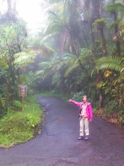 On the trail to the Mt, Britton Tower, through the cloud forest.
