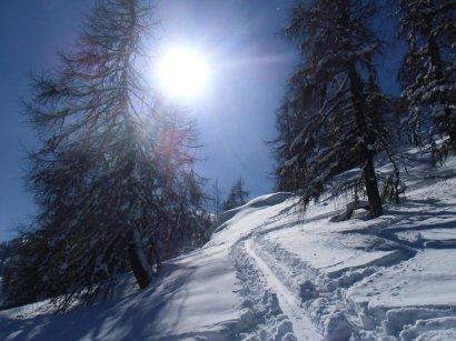 Im Lärchenwald strahlt die Sonne