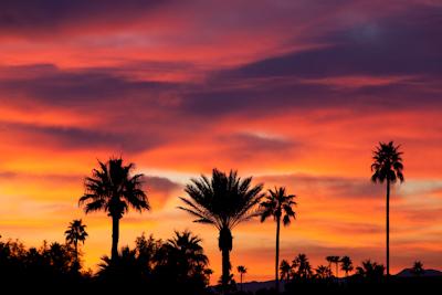 palms and sunrise