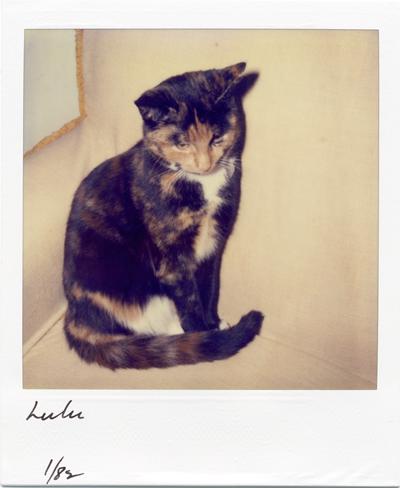 Lulu kitten