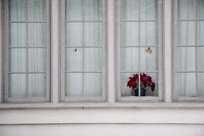 window with poinsetta