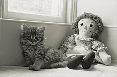 portrait of Rudi as a kitten