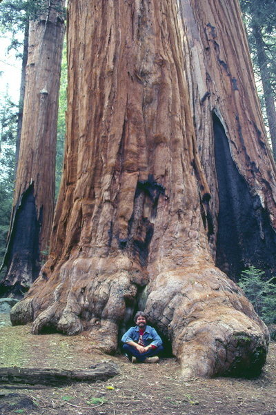 Me at Sequoia