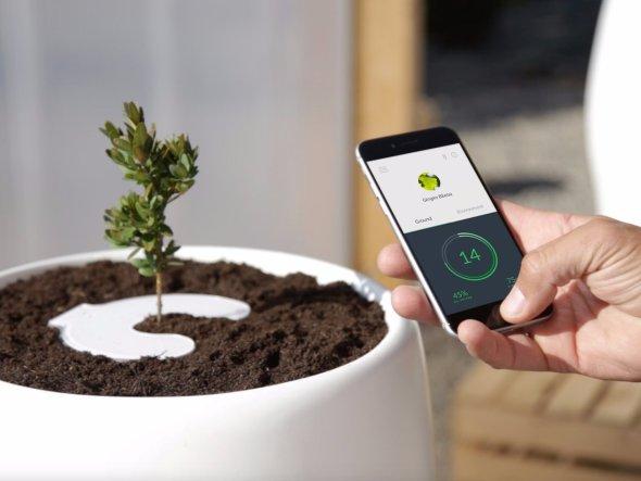 Biosurn te transforma din om in pom