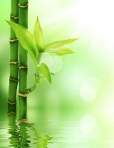 Chinese-Bamboo-Tree-Small