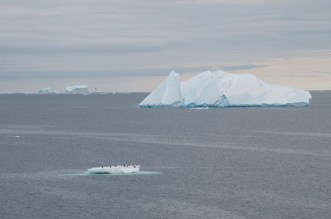 Icebergs and penguins