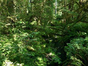 Hoh Rainforest_43
