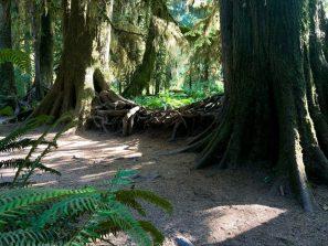 Hoh Rainforest_0097