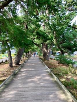 Miho-no-Matsubara_0979