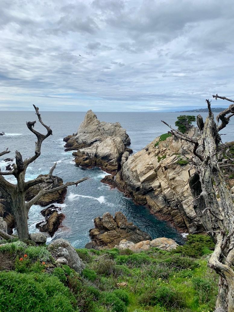 Point Lobos_0522