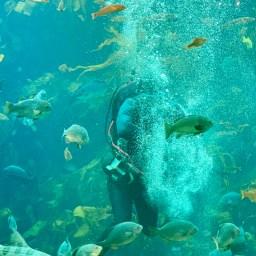 Monterey Aquarium_1080