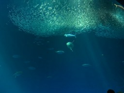 Open Sea feeding_1738