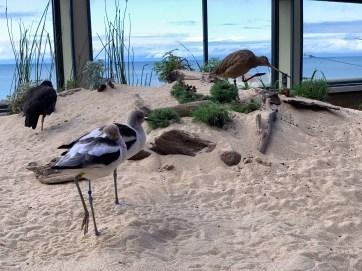 Monterey Aquarium_1787