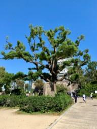 Osaka Castle_0434