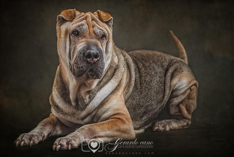 Fotografías reportaje de perros o mascotas Castellon (4)