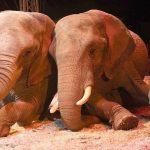 Ein großer Tag für den Zirkus – Ein tiefer Schlag in den Magen, für den radikalen Tierschutz
