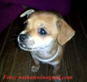 Dieser Hund soll in PeTA Augen Krank und nicht Lebensfähig gewesen sein.