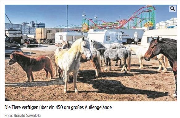 Screenshot: http://www.bild.de/regional/hamburg/hamburger-dom/aktivisten-stuermen-ponyreiten-kinder-verletzt-45160336.bild.html
