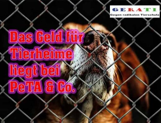 Tierschutzbund und die Tierheimstruktur