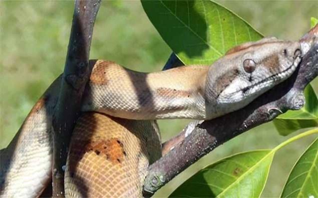 Illegale Importe von Reptilien in Deutschland ein zentrales Problem?
