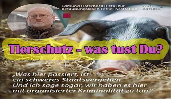 Tierschutz - was tust Du? Screenshot: Facebook