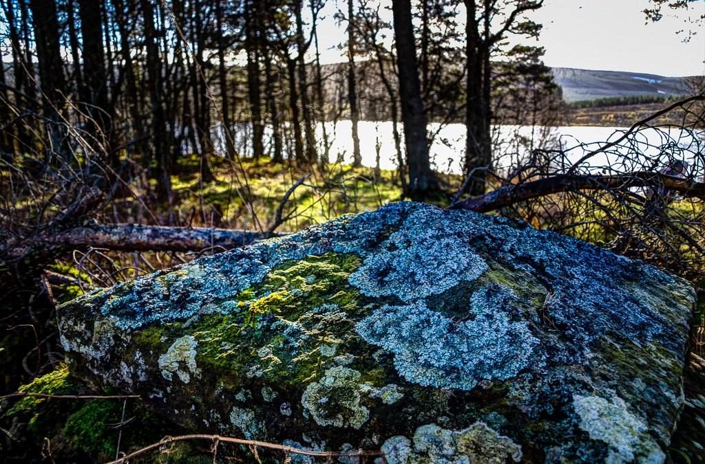 Lichen on a Gatepost