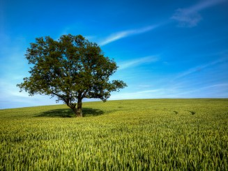 Tree in Summer