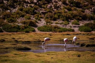 Und nochmal Flamingos